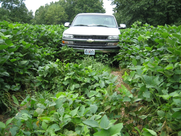 2010 soybean growth mirror high on truck