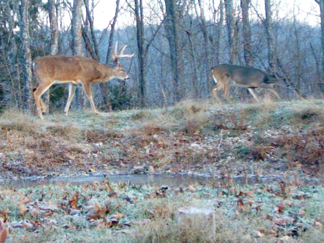 Reconyx Trail Camera Image of Whitetail Buck following a Doe around a Pond Bank