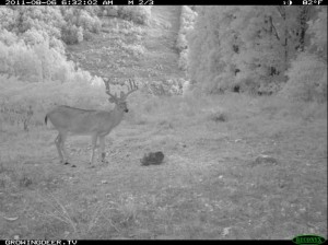 Reconyx Trail Camera Image of Big Whitetail Buck Eating Trophy Rock at night