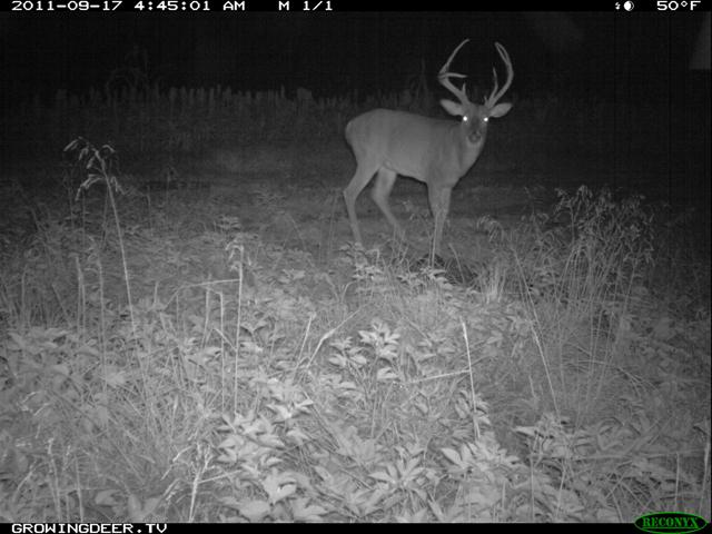 Reconyx Trail Camera Imag of Big Whitetail Buck in 2011