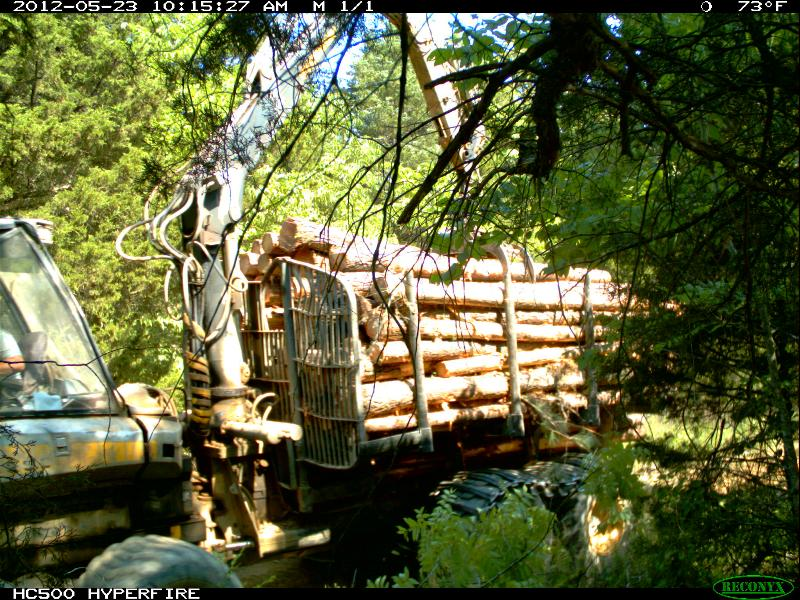 Load of wood on forwarder