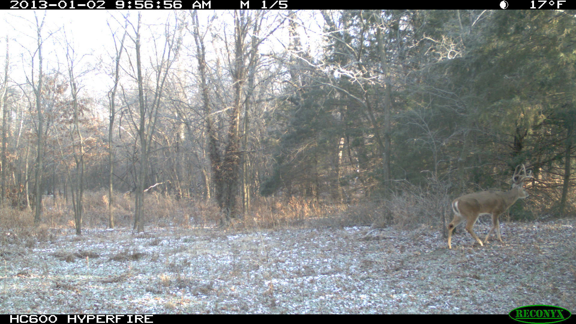 We found both sheds to the buck in this picture