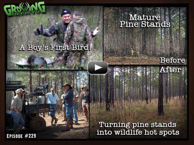 Turning a mature pine stand into a wildlife hot spot in GrowingDeer.tv episode #229.