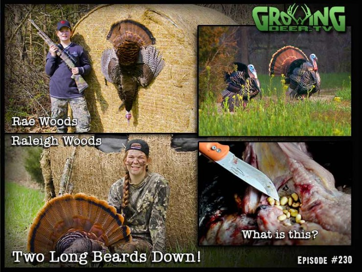 Watch GrowingDeer.tv episode 230 two see Raleigh and Rae Woods double down on a pair of long beards.