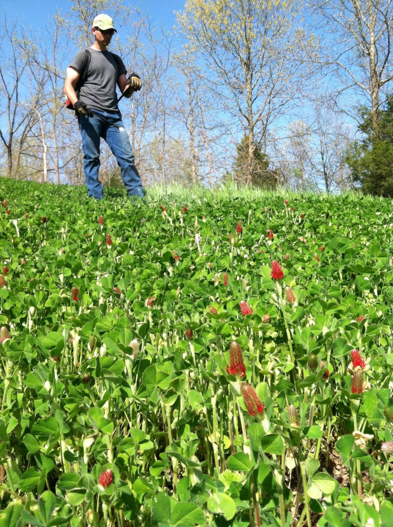 Man spraying weeds in a spring clover food plot