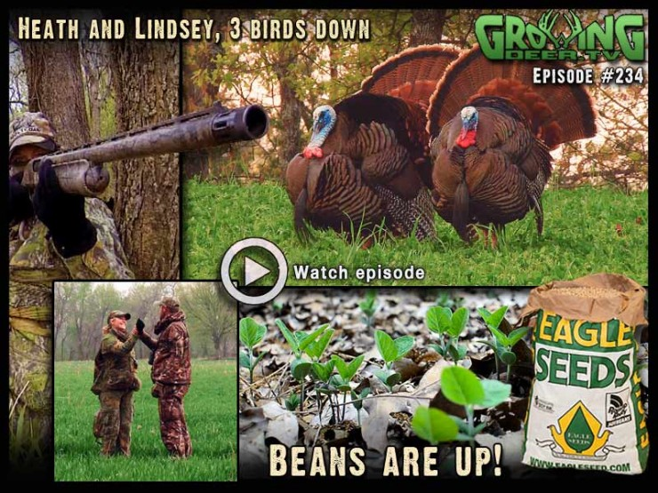 Three turkeys tagged in GrowingDeer.tv episode #234.