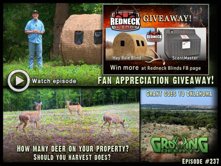 Learn how to know if you should harvest does in GrowingDeer.tv episode #237.
