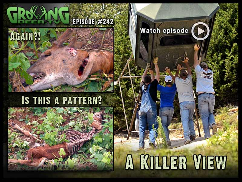 Check out the killer view from our new Redneck Blind in GrowingDeer.tv episode #242.