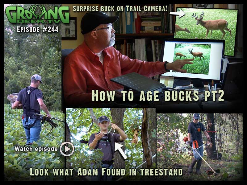 Shoot or Don't Shoot Part 2 in GrowingDeer.tv episode #244.