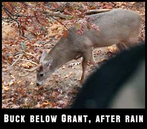 Once you see scrapes being actively used, you know the pre-rut is rolling.