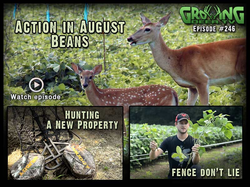 Tips for hunting a new property in GrowingDeer.tv episode #246