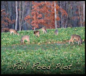 A fall food plot filled with deer during daylight.
