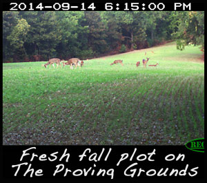 A fall food plot planted with Eagle Seed Broadside