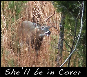 A buck in cover