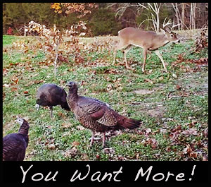 Remove predators to have more deer and turkeys on your property.