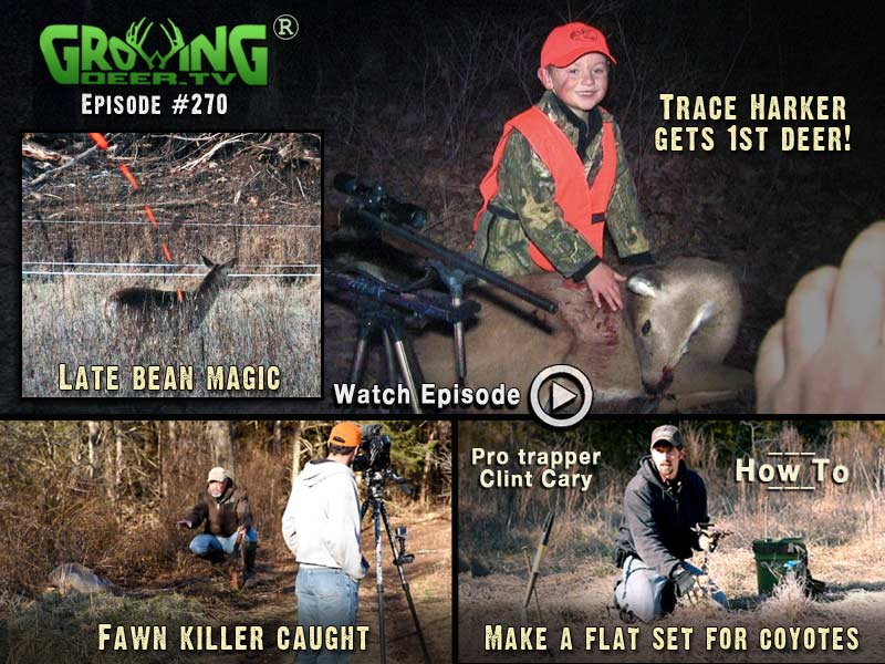 Late bean magic and catching nest predators in GrowingDeer.tv episode #270.