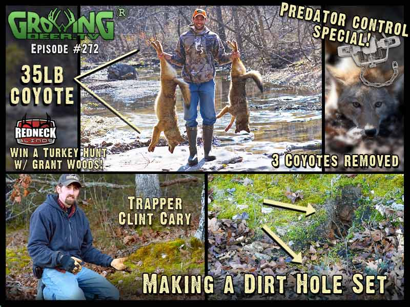 Watch GrowingDeer.tv episode 272 to learn predator control techniques.