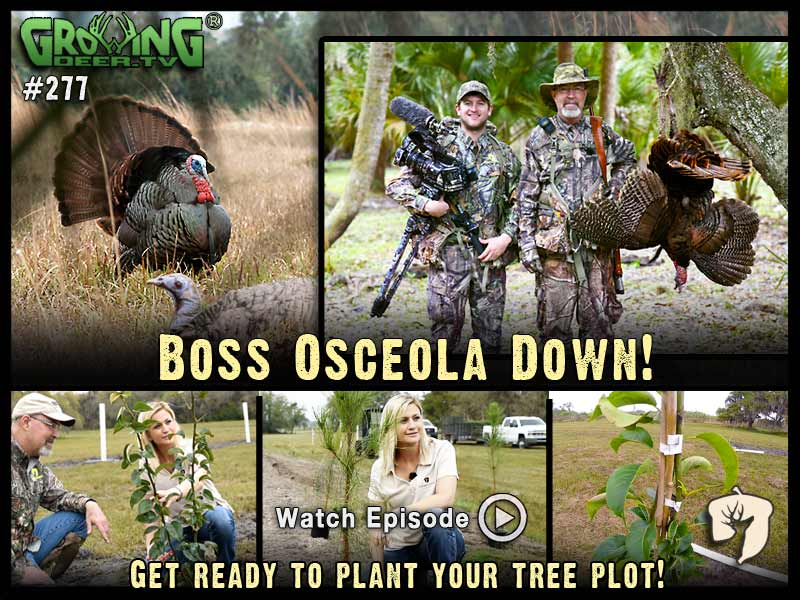 Watch Grant's South Florida turkey hunt in GrowingDeer.tv episode #277.