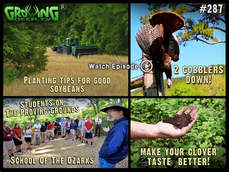 Spring food plot tips in GrowingDeer.tv episode #287.