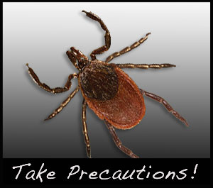 A tick can transmit disease to humans.