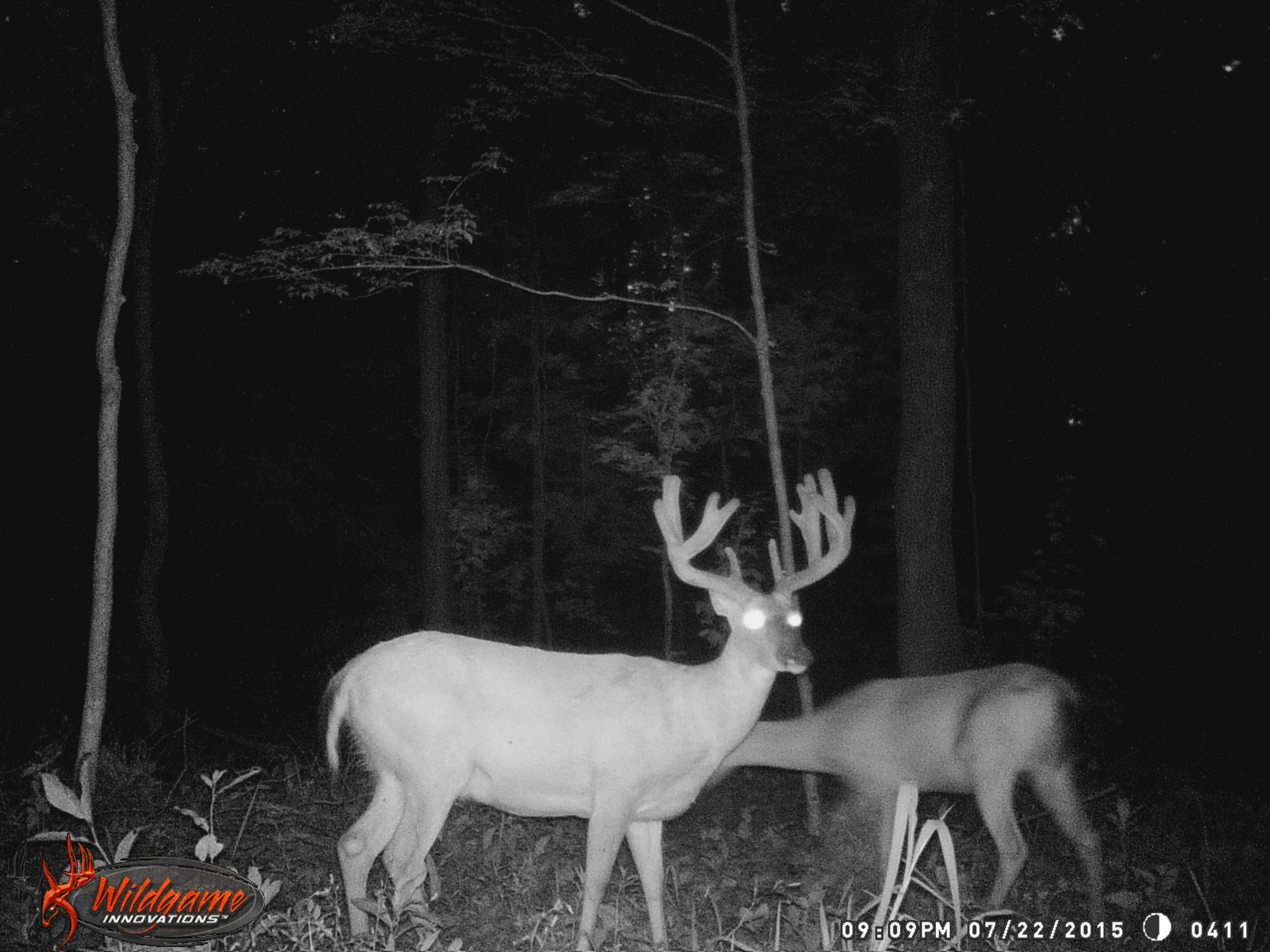 Deer Skinning Pole Plans - How old is this buck