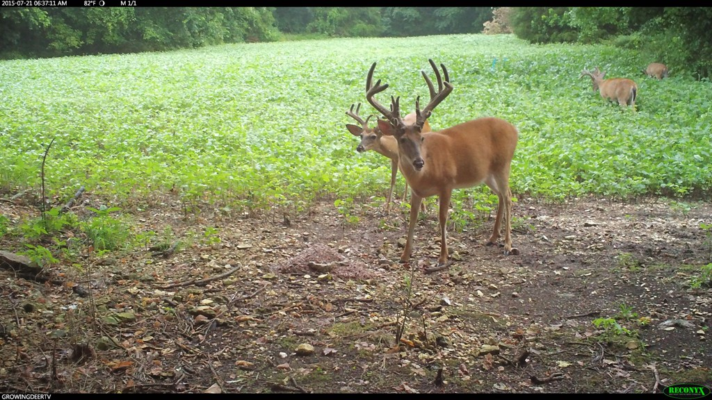 Our #1 hit list buck, Chainsaw
