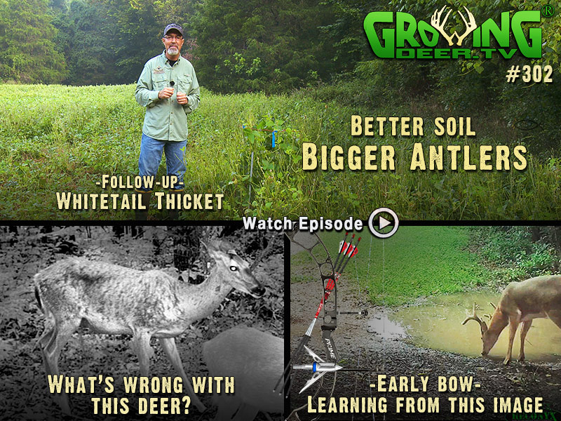 Learn about early season stand selection in GrowingDeer.tv episode #302.