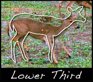 We aim for the lower third because deer often duck.