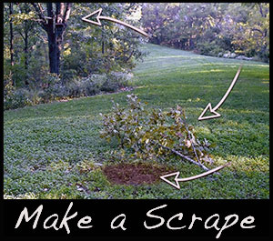 Learn how to set up a mock scrape