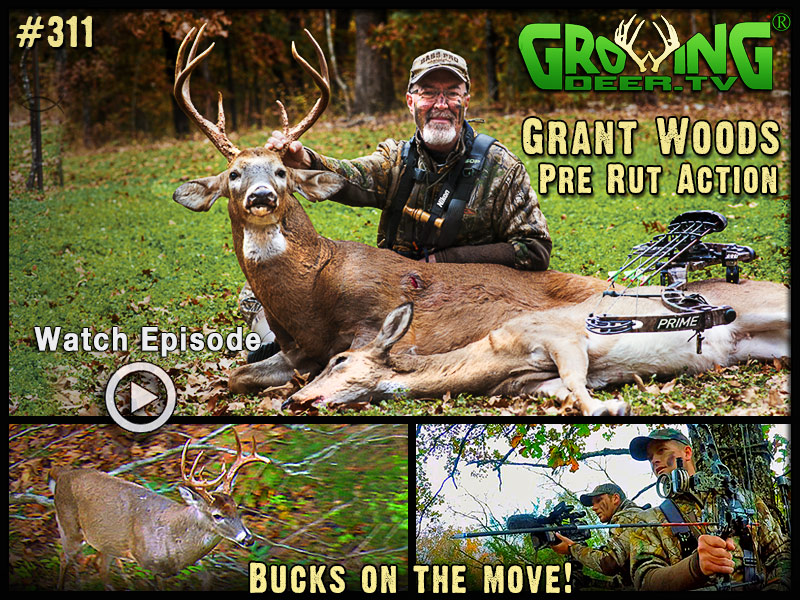 Grant takes advantage of the pre-rut action in GrowingDeer episode #311.