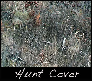 A deer in thick cover.