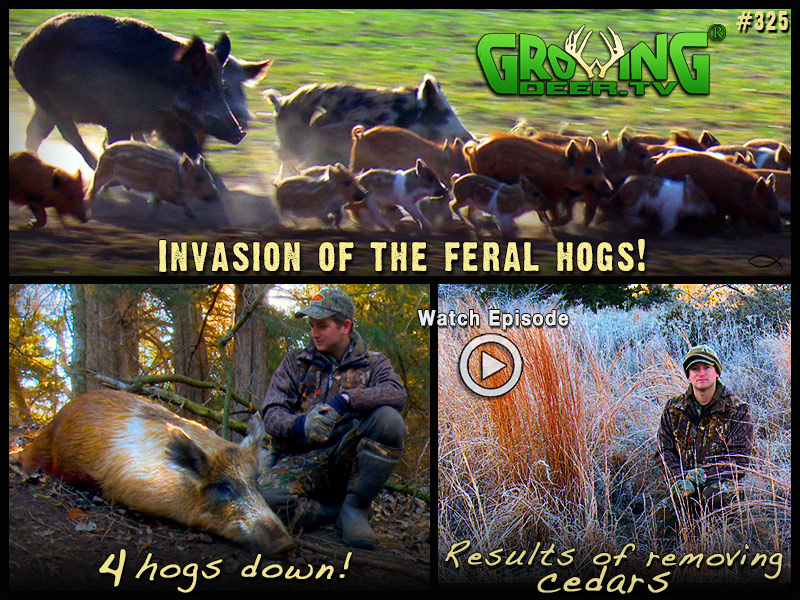Hog hunting action from Oklahoma