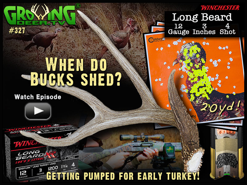 Watch GrowingDeer episode 327 to learn when bucks will shed their antlers