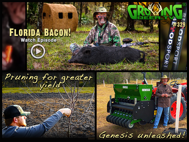 Fruit trees, forage and hog hunting in GrowingDeer episode 329.