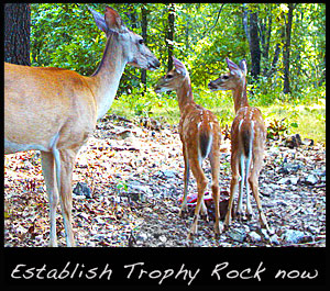 A doe and two fawns at a trophy rock mineral site.