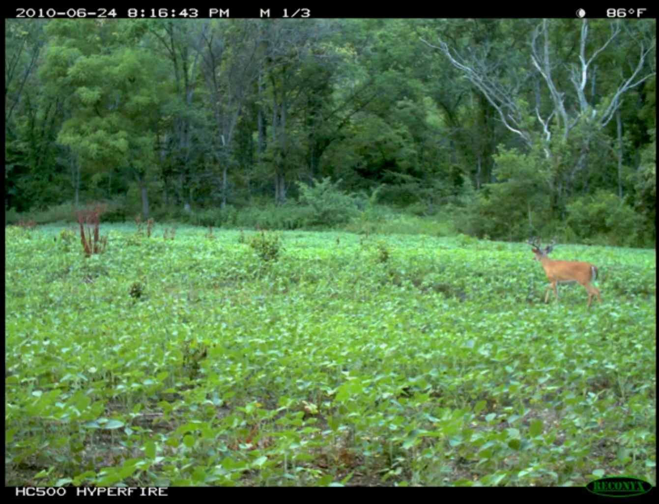 Use trail cameras for scouting