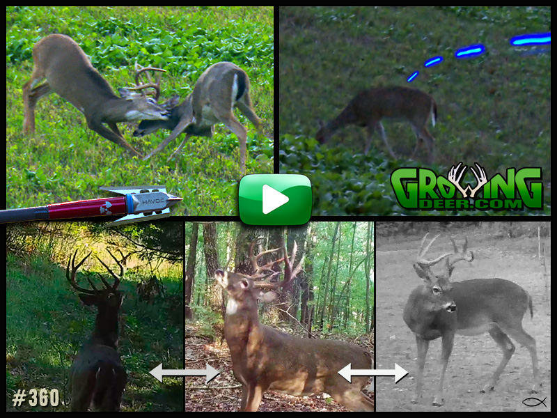 Learn what factors get bucks up and moving in GrowingDeer episode 360.
