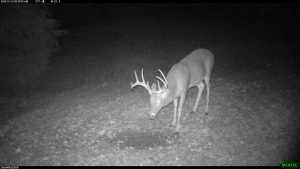 Headturner is a nocturnal buck