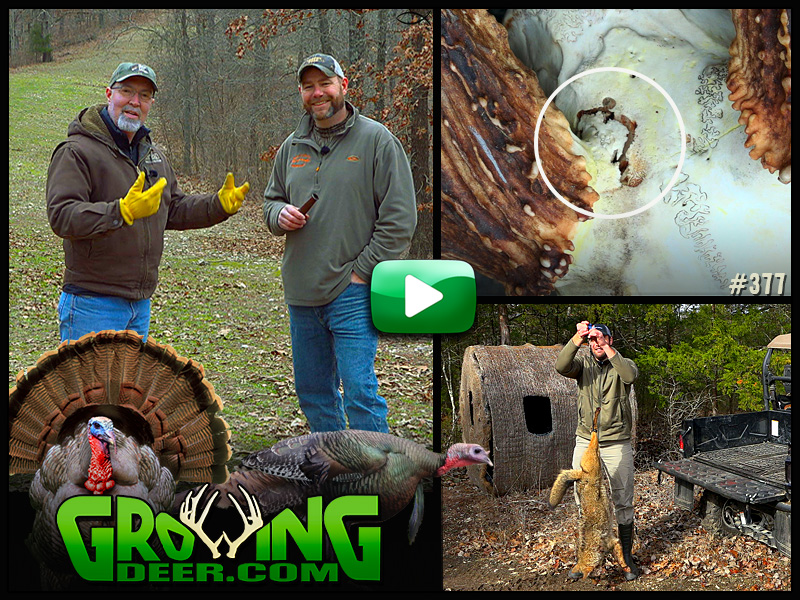 Learn how to locate and call in gobblers in GrowingDeer episode #377.