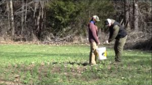 Taking a soil sample from a food plot