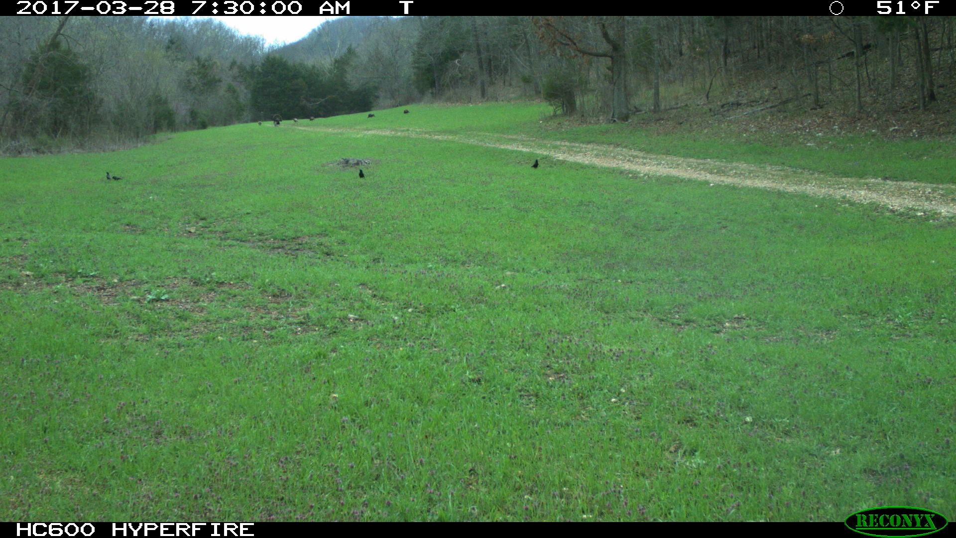 We use Reconyx cameras to scout for turkeys