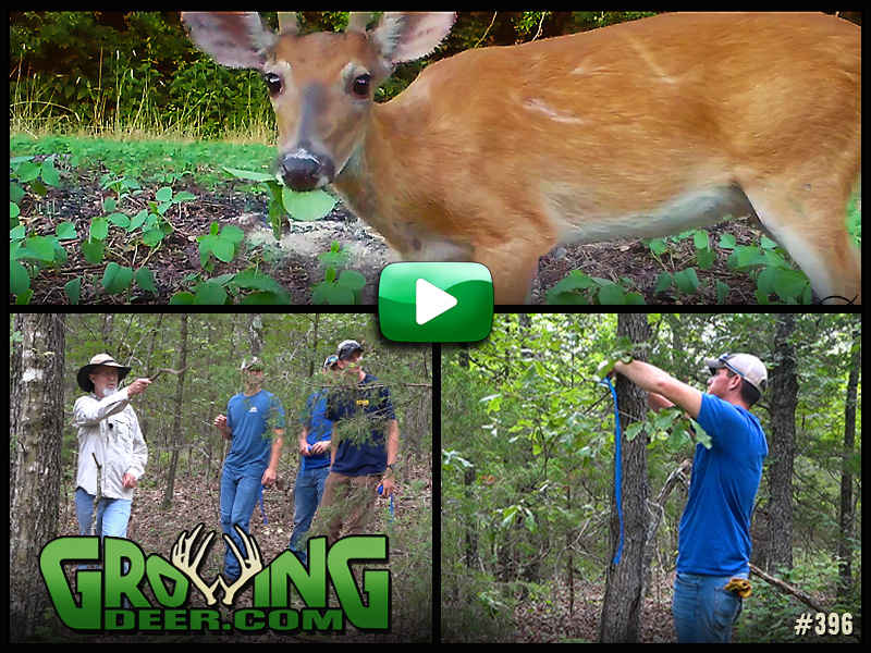 Learn how we design a new food plot in GrowingDeer episode 396.