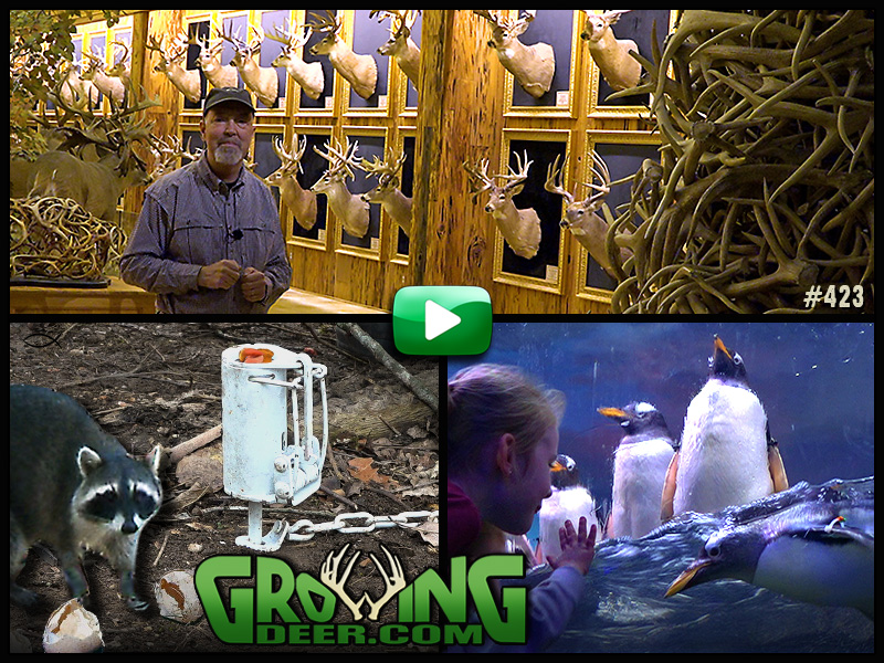 hall of horns with Grant Woods and other images from GrowingDeer #423