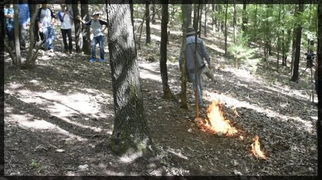 Using a drip torch to set a prescribed fire