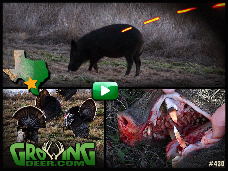Watch GrowingDeer 430 to see us hunt hogs and javelinas in south Texas!