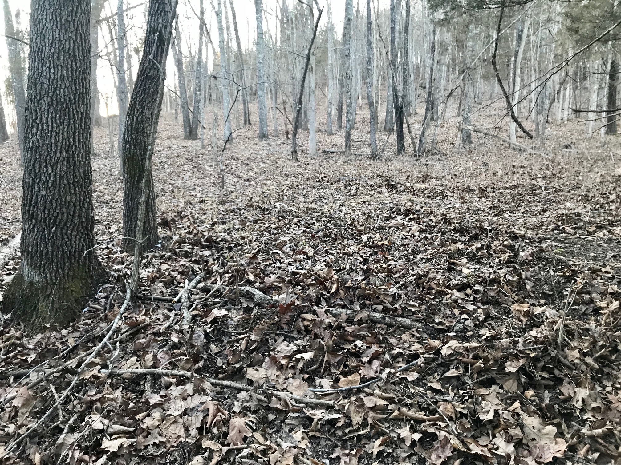two white-tailed deer antlers on the ground amidst leaves in a forest