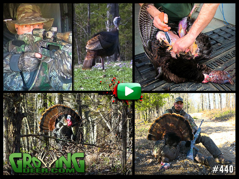 Watch two turkey hunts in GrowingDeer episode 440.