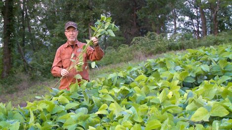 Grant holds a forage soybean