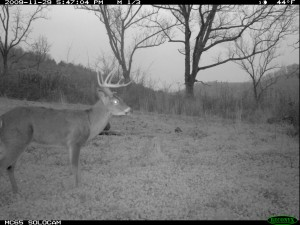 Reconyx image of Barely 10 buck