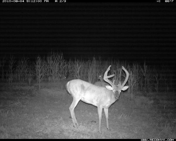 Recony Trail Camera Image of Big Whitetail Buck taken in 2010